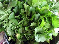 FRESH TURNIPS & TURNIP GREENS